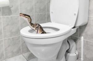 snake-in-toilet